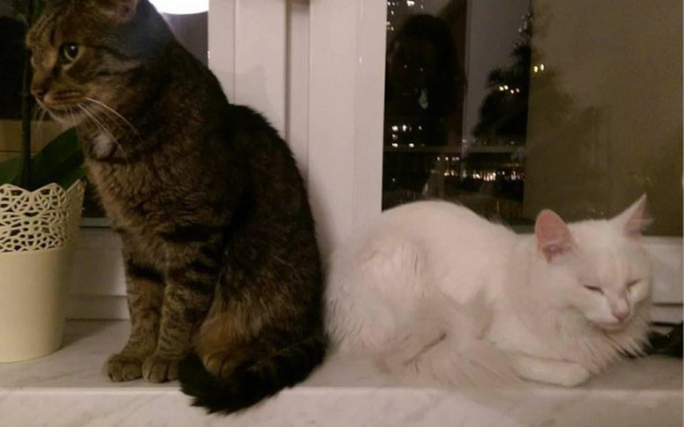Zbiórka Leczenie 2 przecudnych kociaków. - zdjęcie główne