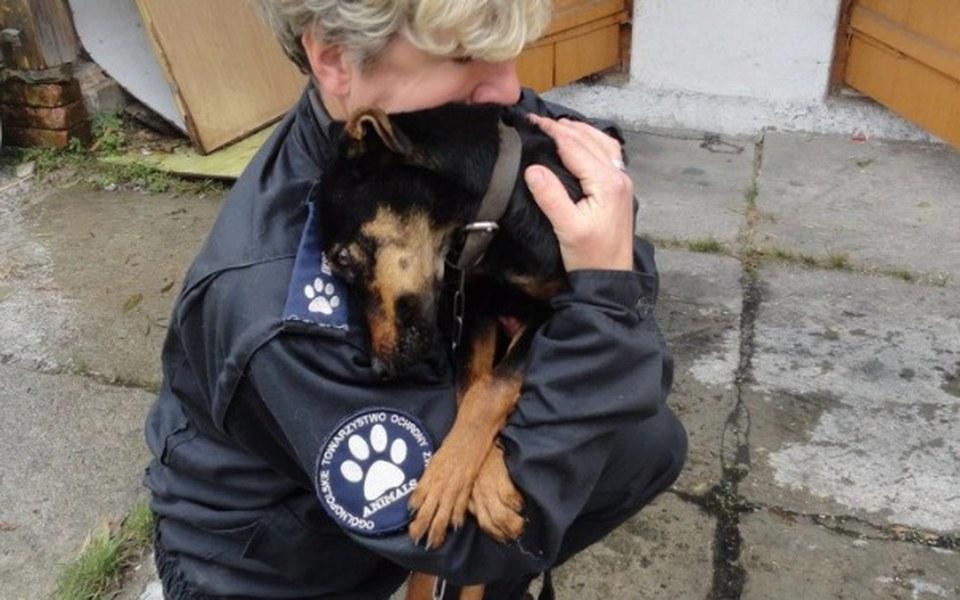 Zbiórka Insp. ds ochrony zwierząt Zamość - zdjęcie główne