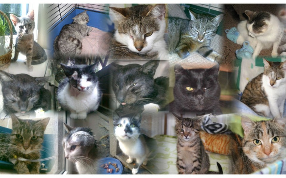 Zbiórka Koci azyl prosi o wsparcie - zdjęcie główne