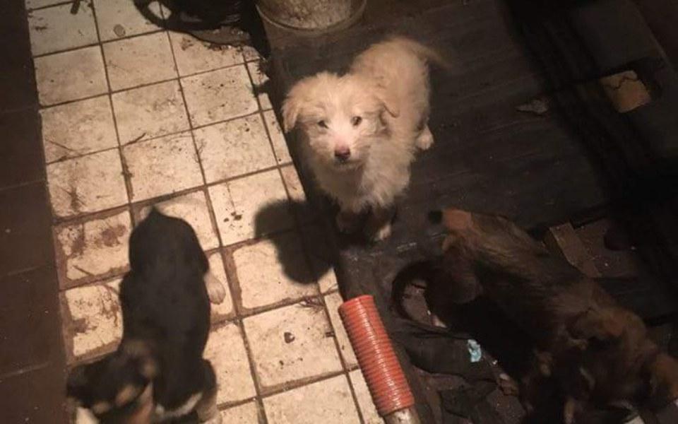 Zbiórka Pomoc wiejskim psom - zdjęcie główne