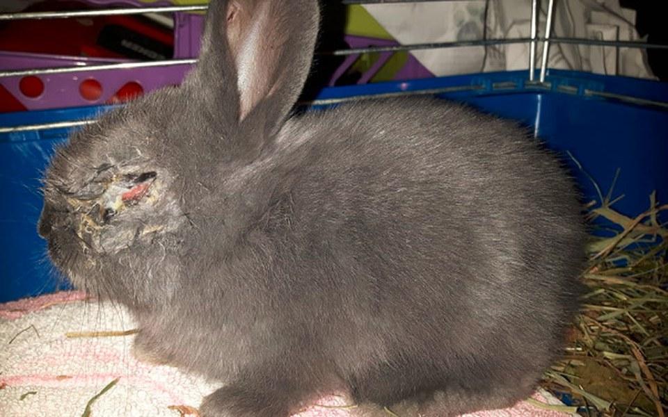 Zbiórka Okienko życia dla królików - zdjęcie główne