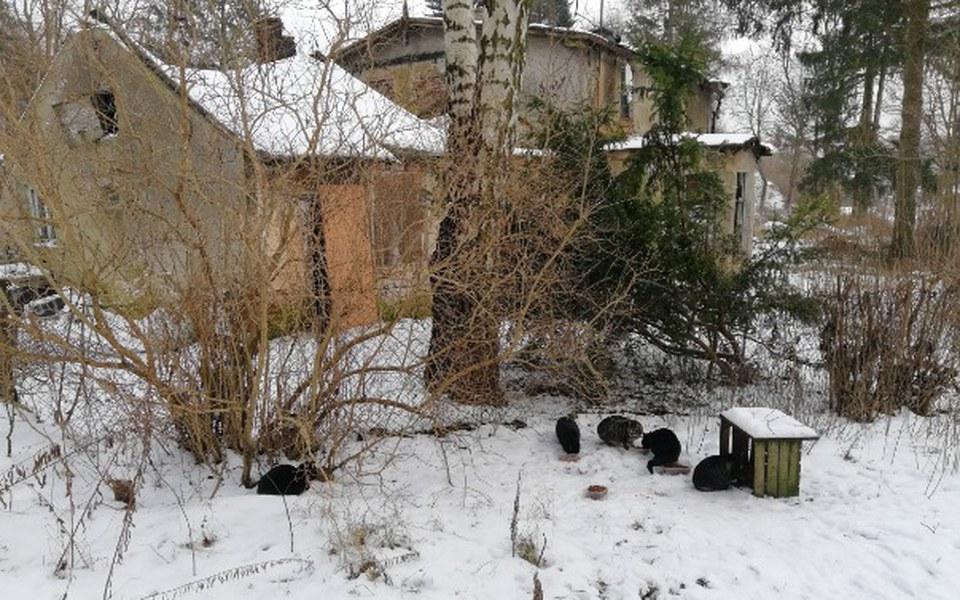 Zbiórka Karma dla kotów z pustostanu! - zdjęcie główne