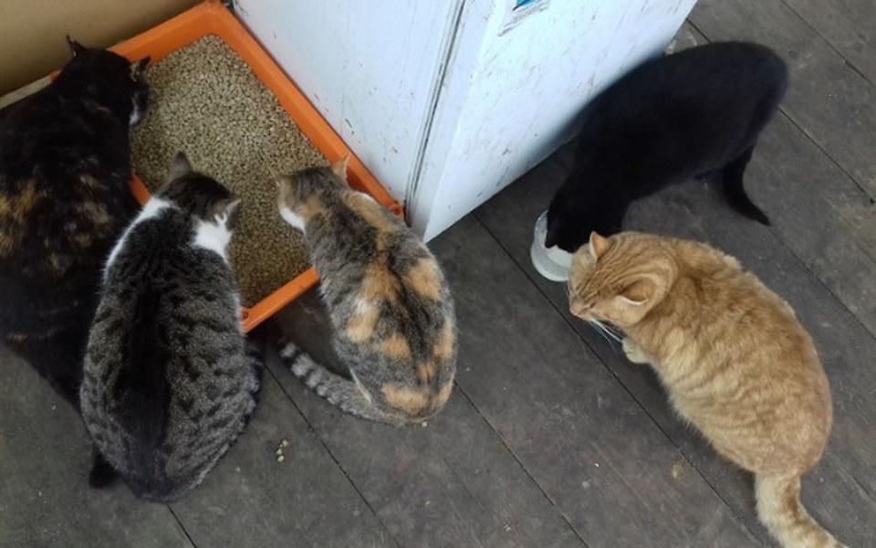 Zbiórka Koty z Magdalenowa w potrzebie - zdjęcie główne