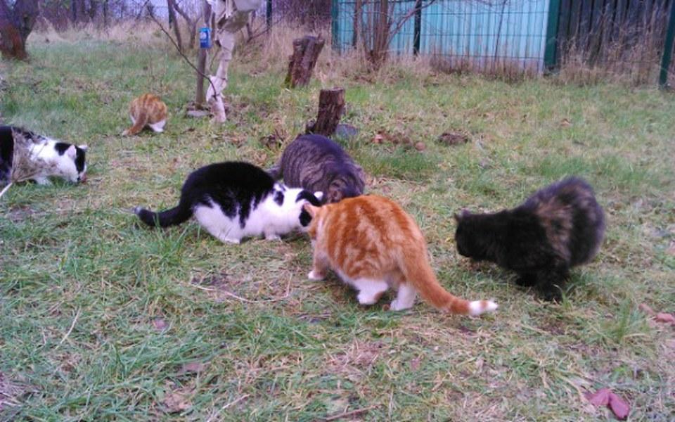 Zbiórka Wsparcie kotów wolnożyjących - zdjęcie główne