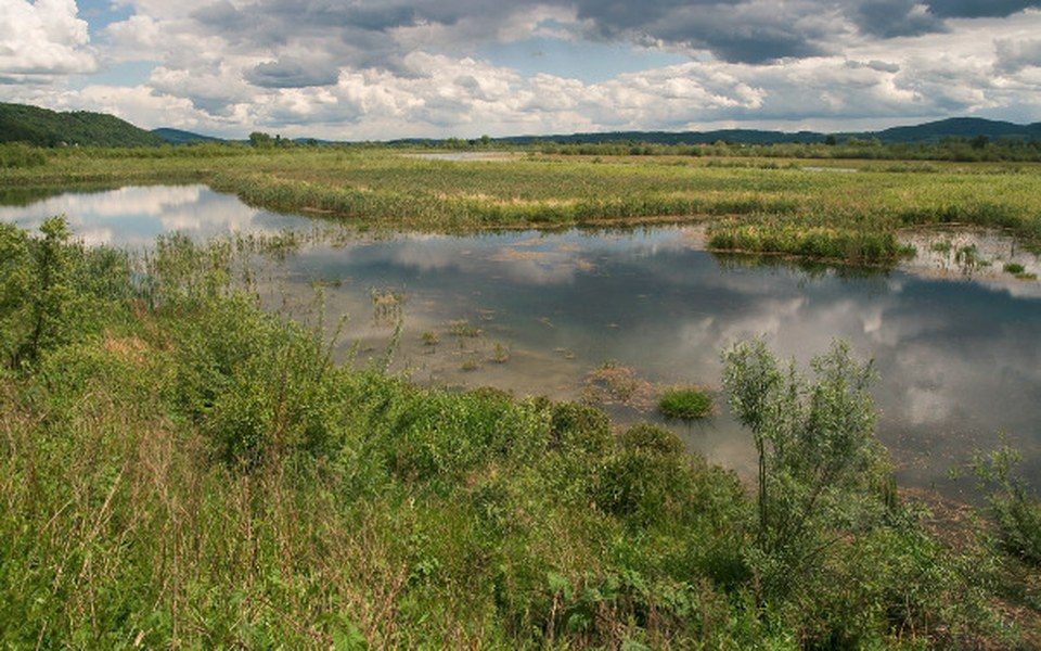 Zbiórka Ptaki dolin rzecznych Małopolski - zdjęcie główne