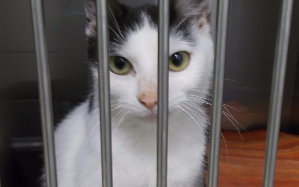 Zbiórka Moli - kotka z chorymi jelitami - zdjęcie główne