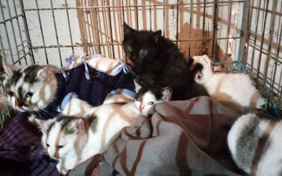 Zbiórka Spłata długu na leczenie kotów - zdjęcie główne