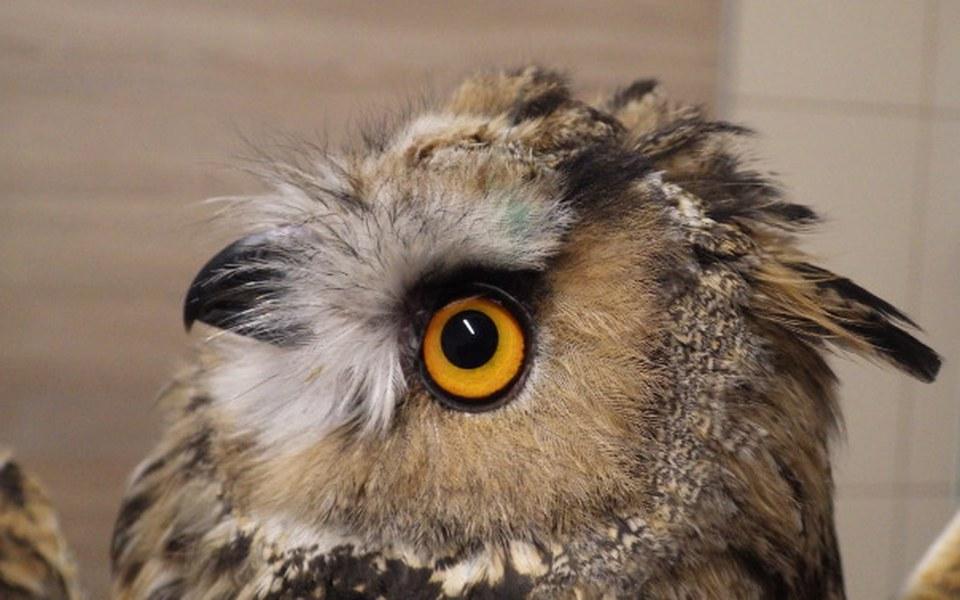 Zbiórka Woliery dla dzikich ptaków - zdjęcie główne