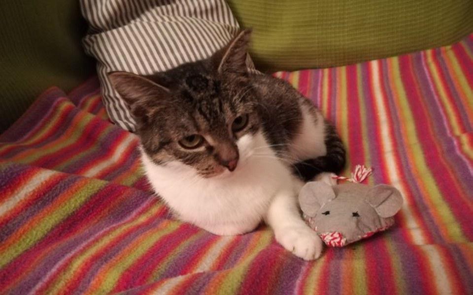 Zbiórka Rehabilitacja kotki Zuzi - zdjęcie główne