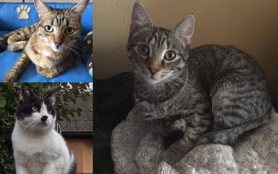 Zbiórka Koty proszą o grosik na żwirek - zdjęcie główne