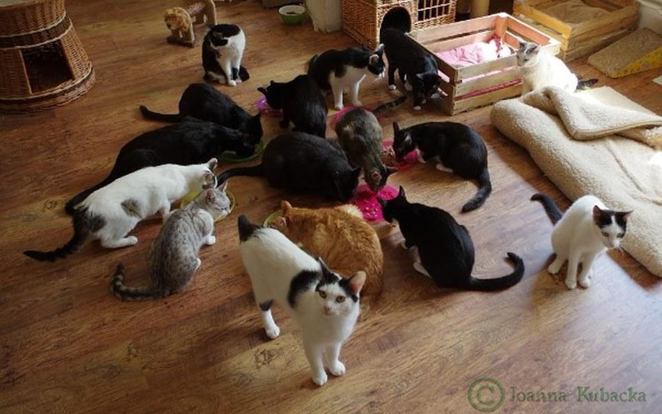 Zbiórka Pralka dla Fundacji Koty Katowic - zdjęcie główne