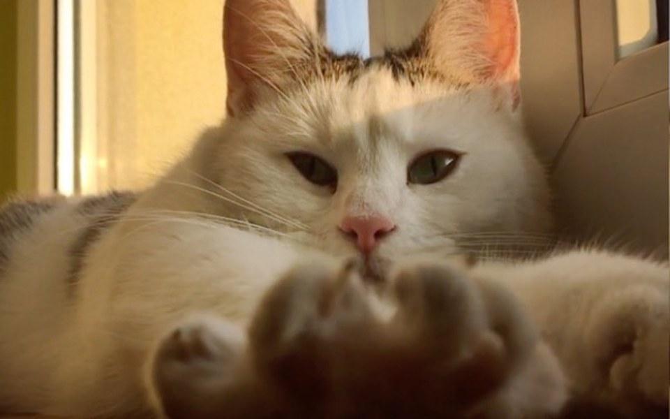 Zbiórka Koci apel- 9 kotów prosi o pomoc - zdjęcie główne