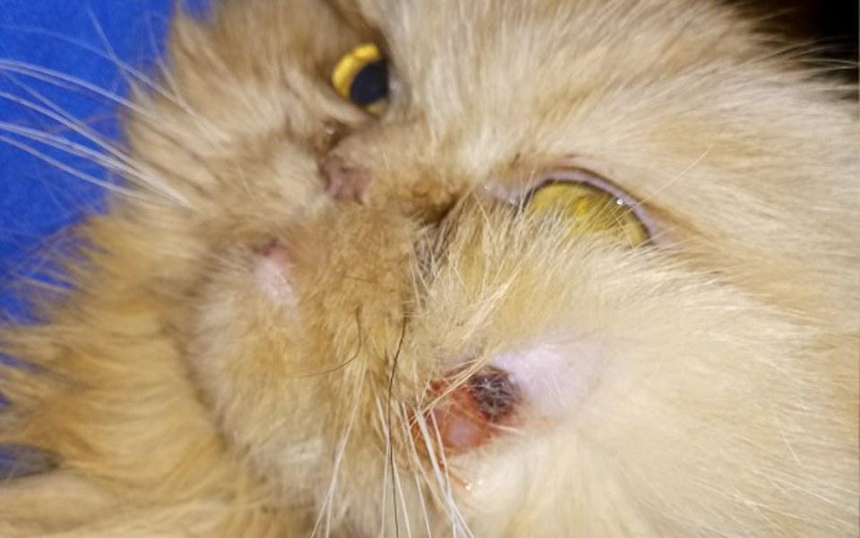 Zbiórka Pomoc dla kochanej kotki Milki - zdjęcie główne
