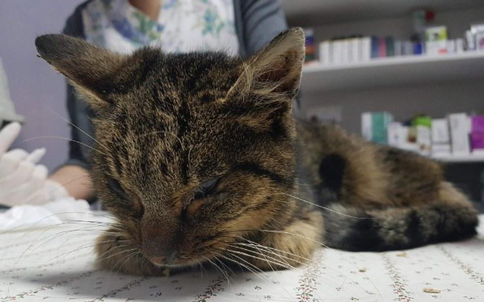 Zbiórka Koty spod Bloku - wiosna 2018 - zdjęcie główne