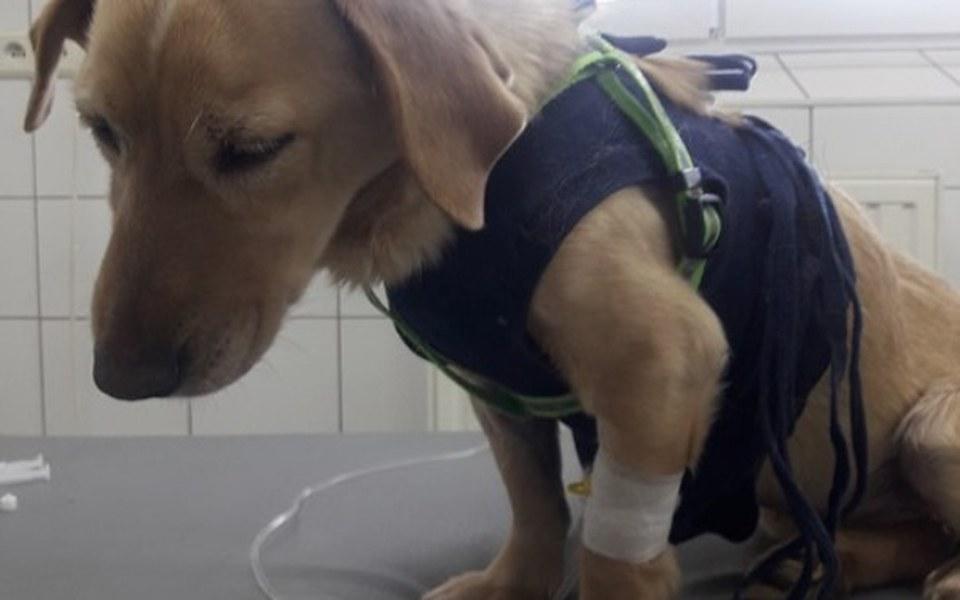 Zbiórka Pomoc skrzywdzonym psom i kotom - zdjęcie główne