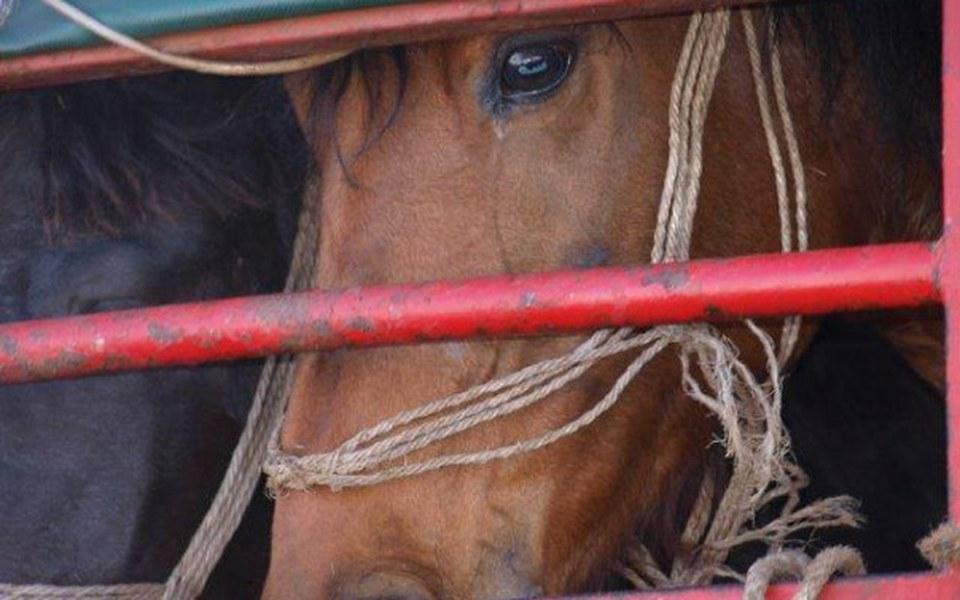 Zbiórka Skaryszew - ocalmy końskie życie - zdjęcie główne