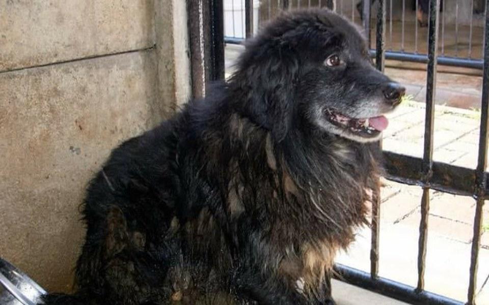 Zbiórka Na nowe życie schroniskowego psa - zdjęcie główne
