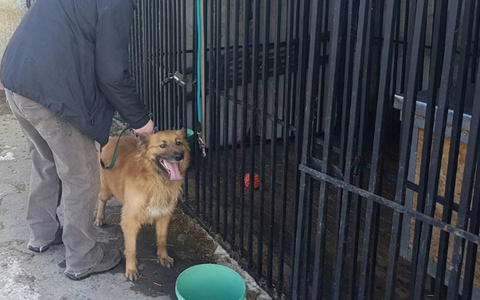 Zbiórka Kojec dla bezdomniaka - PILNE - zdjęcie główne