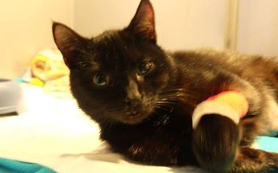 Zbiórka Pomóż złamanej kociej łapce - zdjęcie główne