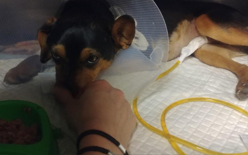 Zbiórka Janek - uratuj psa po wypadku!!! - zdjęcie główne