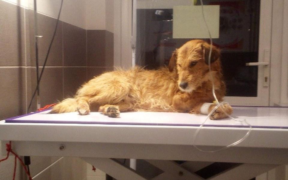 Zbiórka Newton pies ktory uciekl smierc - zdjęcie główne