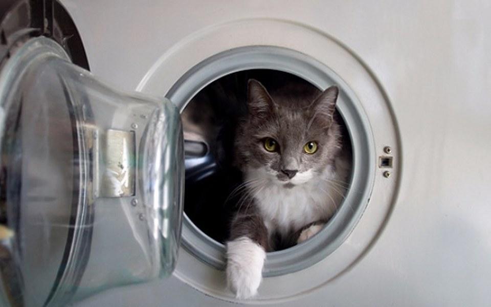 Zbiórka Bardzo potrzebna kocia pralka! - zdjęcie główne
