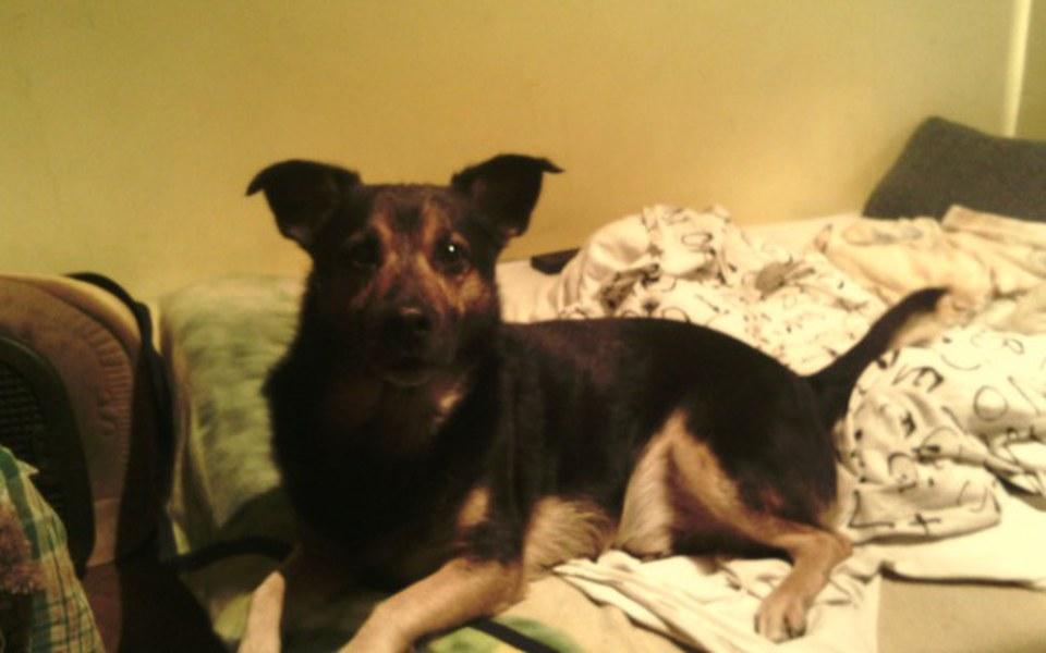 Zbiórka Operacja więzadła psa Atos - zdjęcie główne