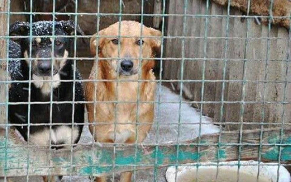 Zbiórka Ratunek dla psów na Ukrainie! - zdjęcie główne