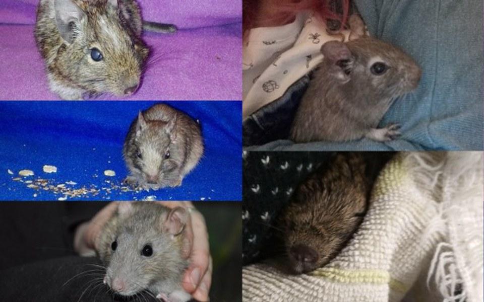 Zbiórka Eza, Aria, Sansa,Halina i Silver - zdjęcie główne