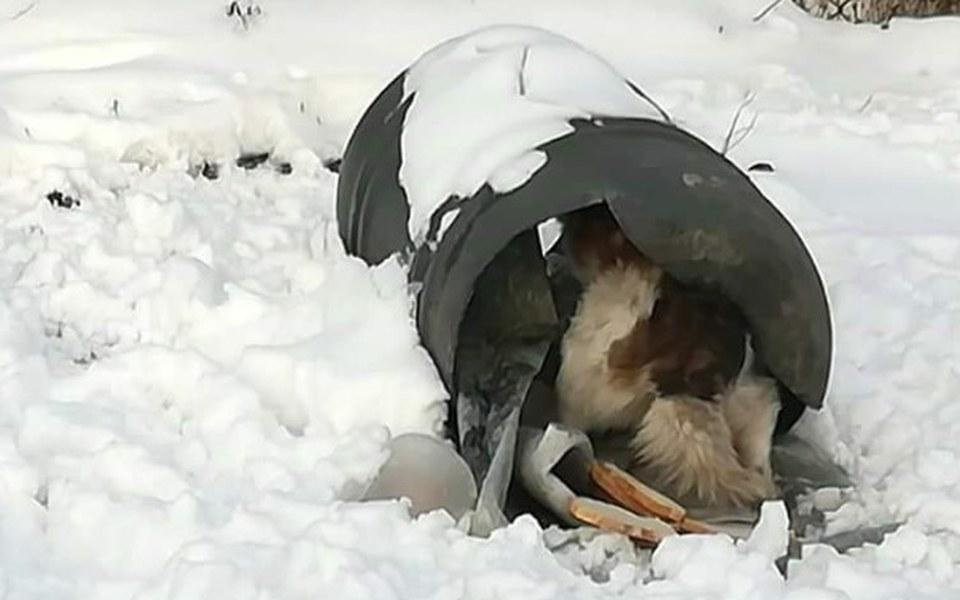 Zbiórka SOS dla psa z beczki - zdjęcie główne