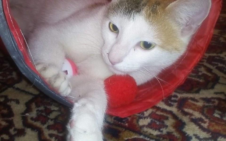 Zbiórka Na sterylizacje 2 kotek ze wsi😦 - zdjęcie główne