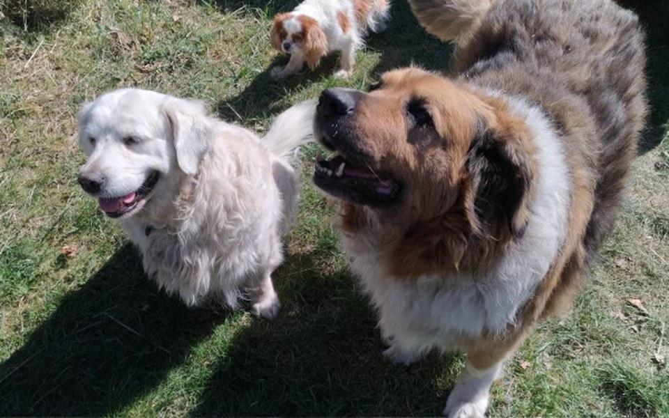 Zbiórka Psy i Koty Pani Agnieszki - zdjęcie główne