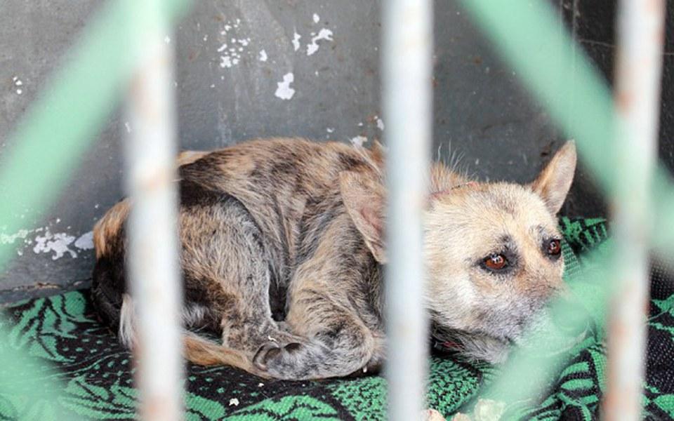 Zbiórka Ostatni pisk rozpaczy 50 psów - zdjęcie główne