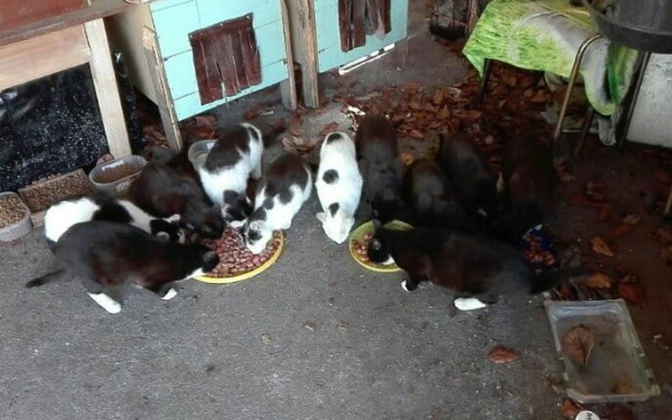 Zbiórka Kocia bieda,głód i bezdomność - zdjęcie główne