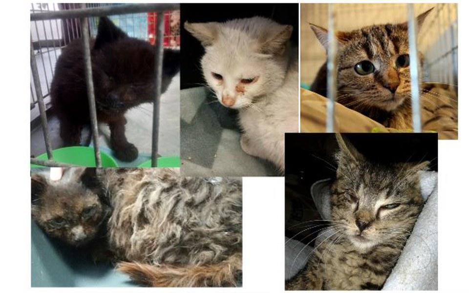 Zbiórka Spłata długu na leczenie kotów. - zdjęcie główne