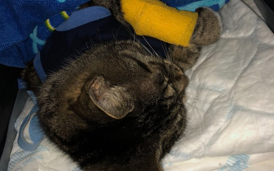 Zbiórka Kotek Cioci zbiera na zycie - zdjęcie główne