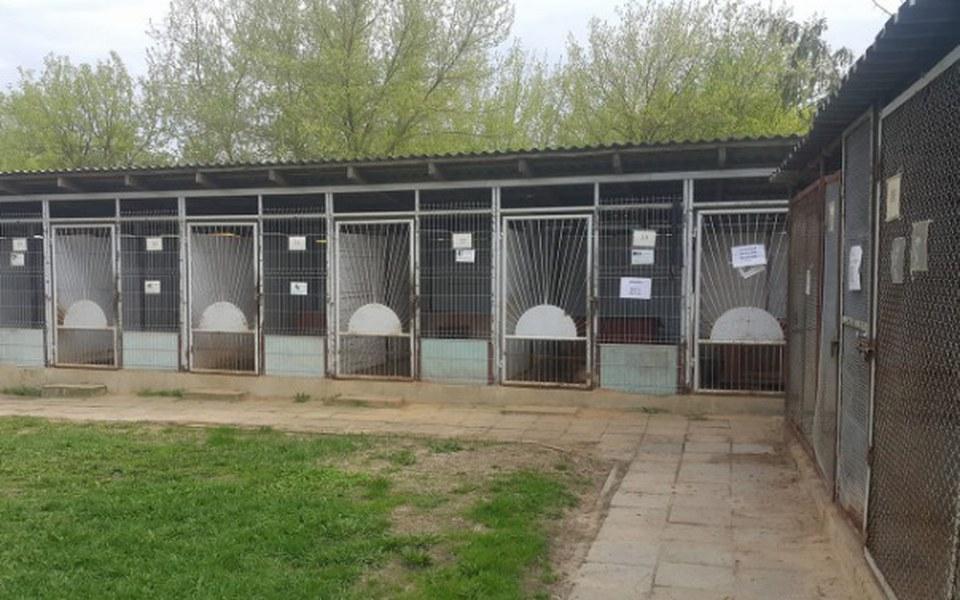 Zbiórka Kolorowe Schronisko dla Zwierząt - zdjęcie główne