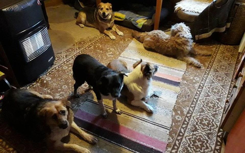 Zbiórka Karma dla psiaków Pani Teresy - zdjęcie główne