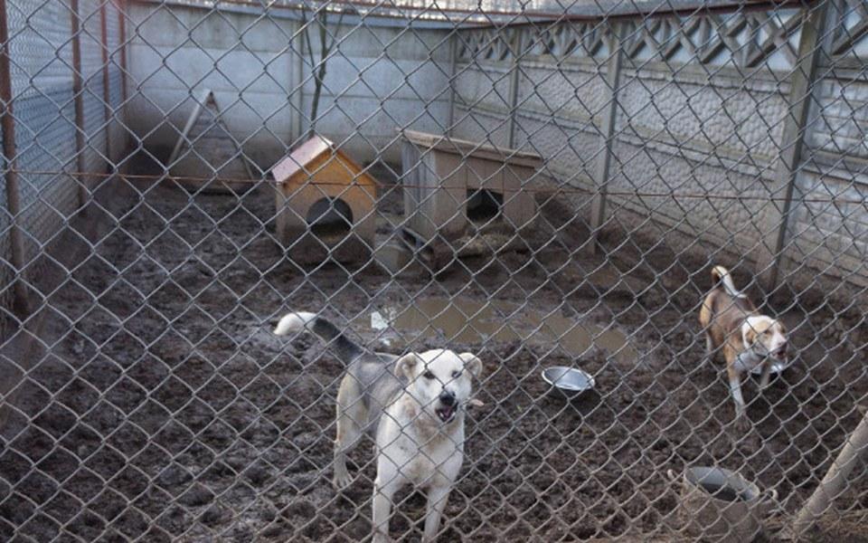 Zbiórka Stwórzmy psom bezpieczne miejsce - zdjęcie główne