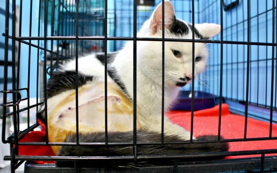 Zbiórka Kot z potrzaskaną kością udową - zdjęcie główne