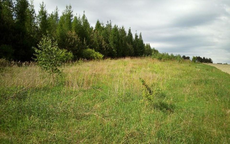 Zbiórka Sadzimy drzewa, 0,5h lasu - zdjęcie główne
