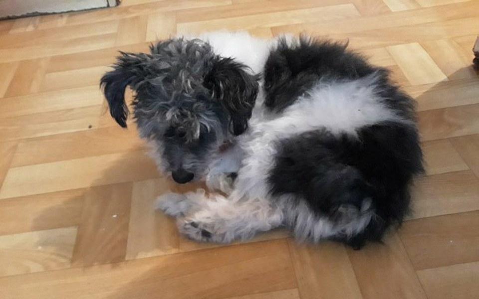 Zbiórka starego, głuchego i ślepego psa - zdjęcie główne