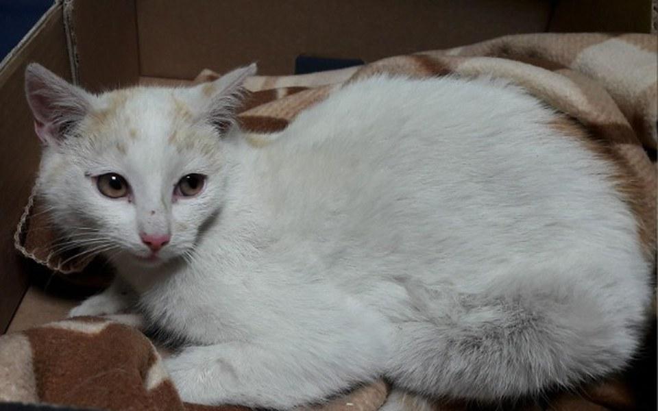 Zbiórka Kefir - kot, który potrącił auto - zdjęcie główne