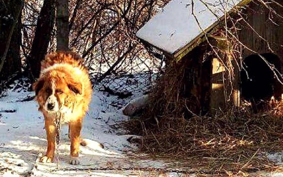 Zbiórka Psi los-ze schroniska na łańcuch - zdjęcie główne