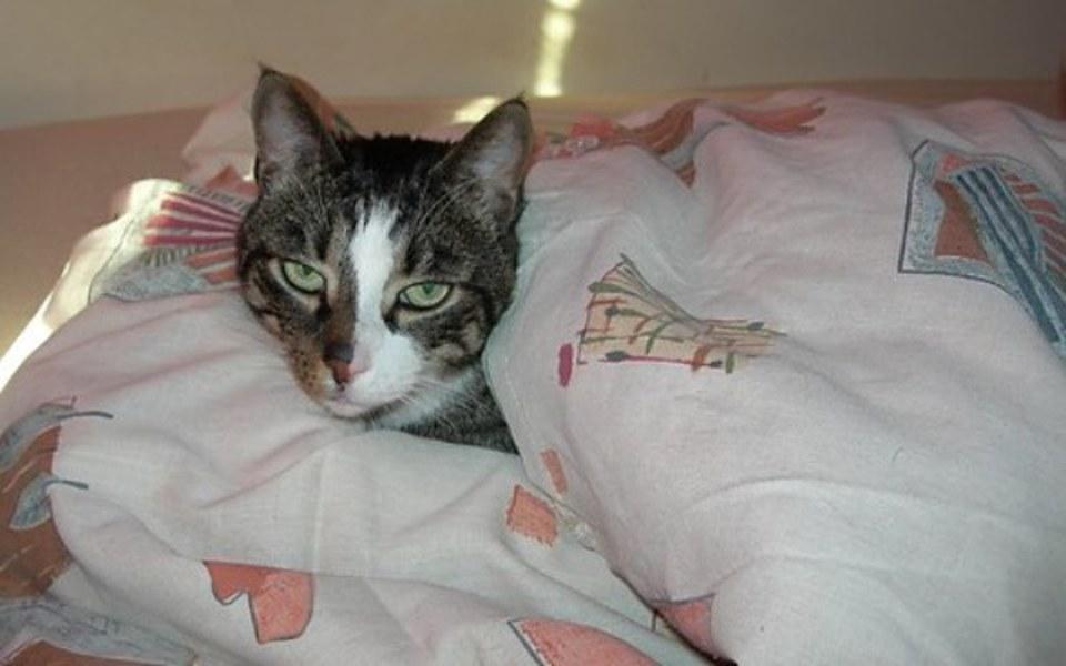 Zbiórka Kotek potrzebuje pomocy !!!!! - zdjęcie główne