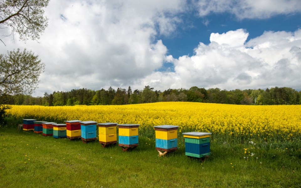 Zbiórka Pomoc dla pszczół - zdjęcie główne