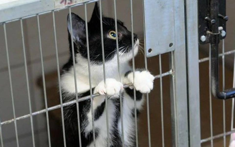 Zbiórka Leczenie bezdomnych zwierząt - zdjęcie główne