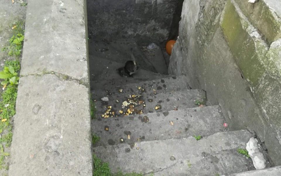 Zbiórka Kociaki z chlewu - zdjęcie główne