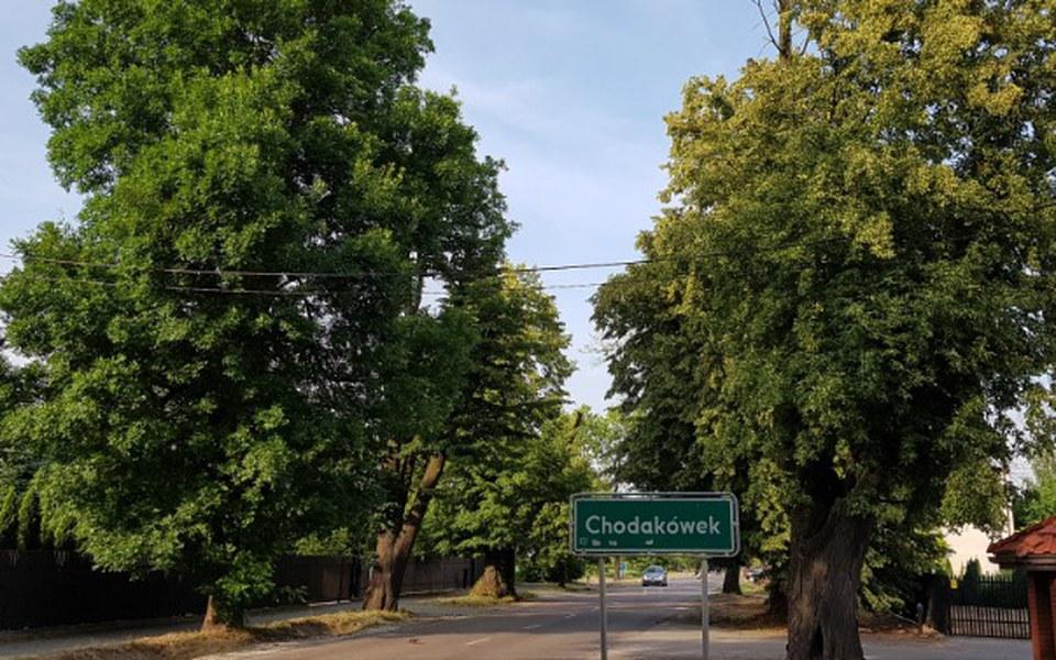 Zbiórka Aleja lipowa w Żelazowej Woli - zdjęcie główne