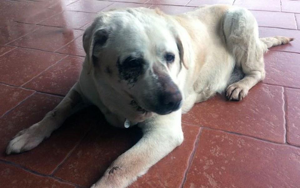Zbiórka Pomóżmy w leczeniu bidulki Buni! - zdjęcie główne